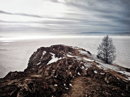 - It can be lonely on the top - susurrates a tree. by 8moments
