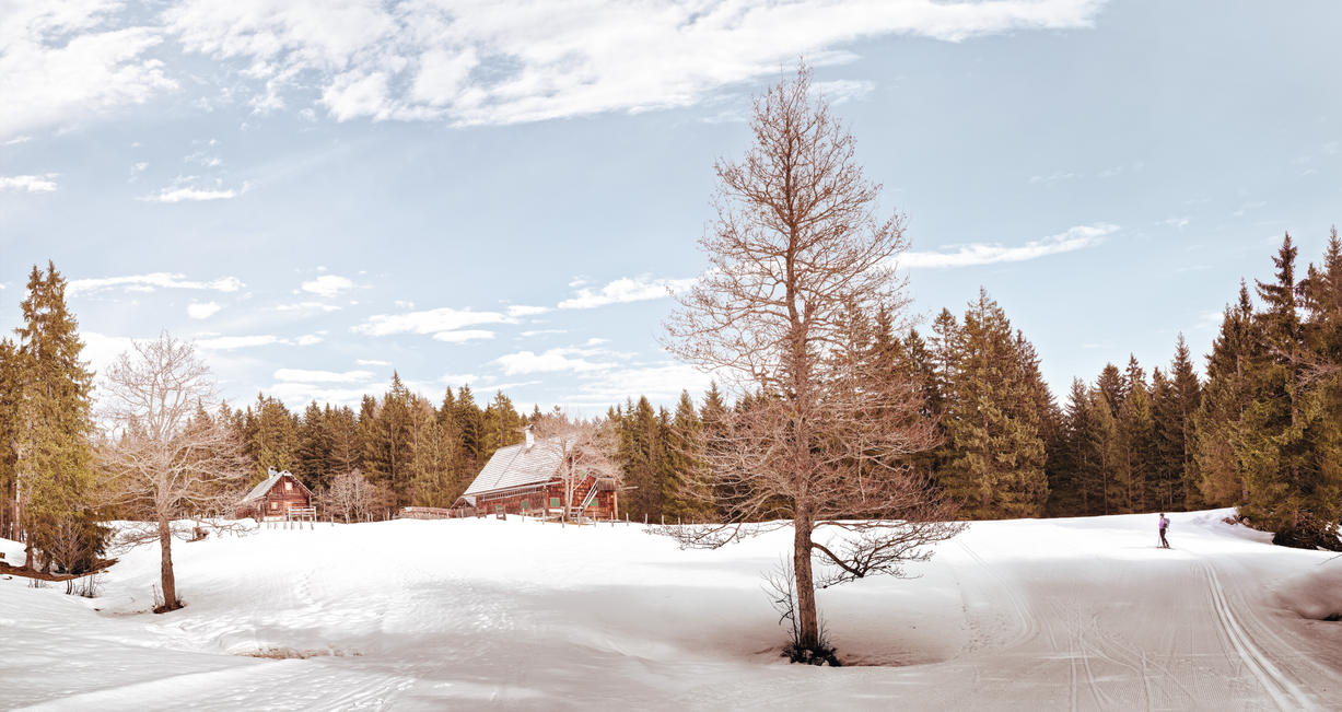 Last winter day. Let us go cross-country skiing. by 8moments