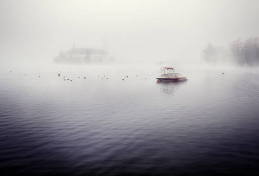 Waiting for nothing - ducks, fog and a boat