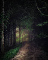 walk in the forest by 8moments