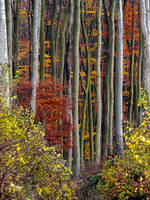 wall of fall by 8moments