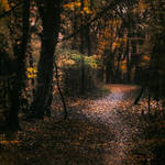 walk in autumnal woods
