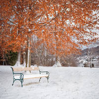 Between fall and winter there is a bench. by 8moments