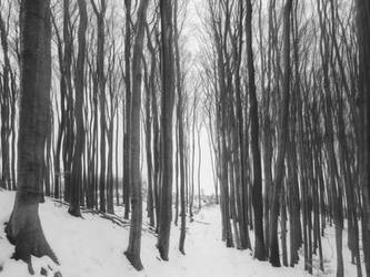 Naked winter trees. by 8moments