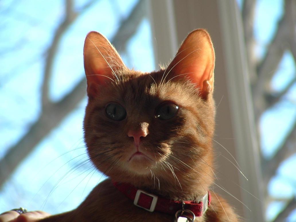 Loki in Sunlight by Arkyrra