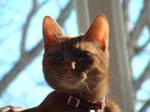 Loki in Sunlight