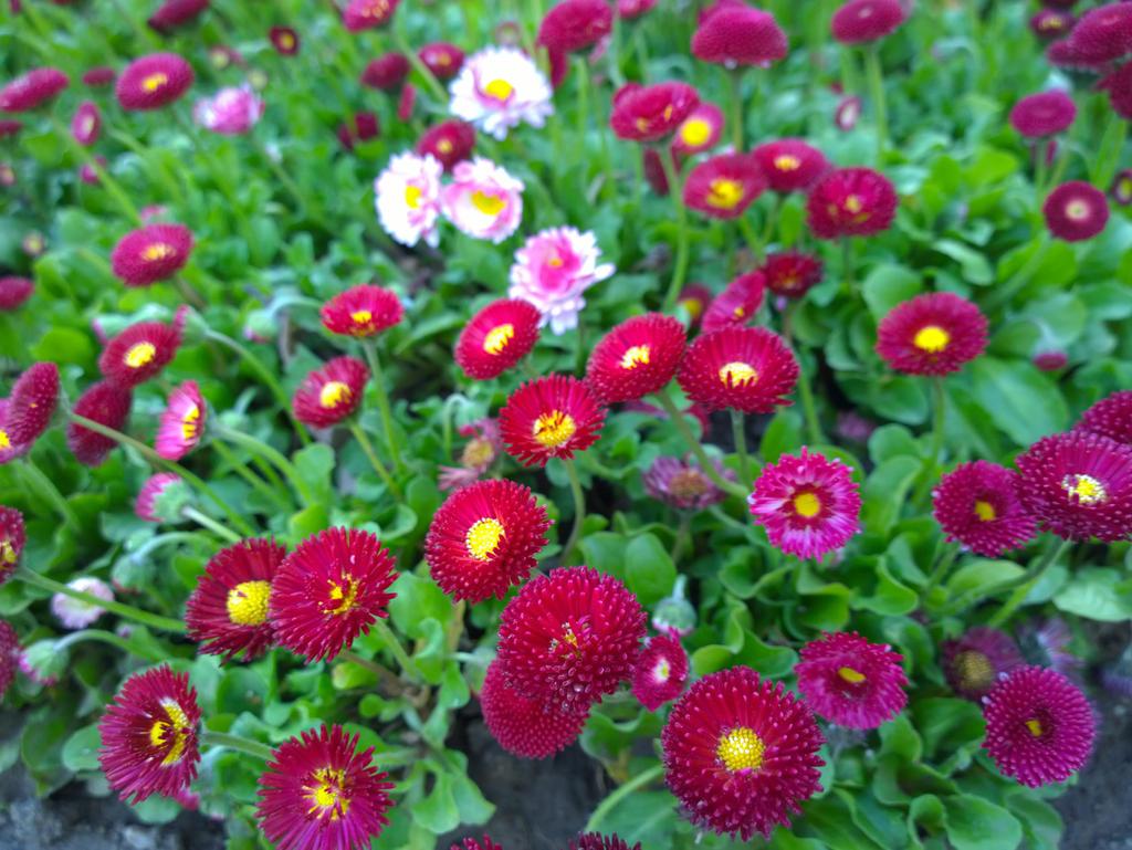Flower in Cismigiu park by CORinAZONe