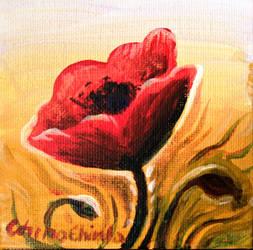 papaver rhoeas flower by CORinAZONe
