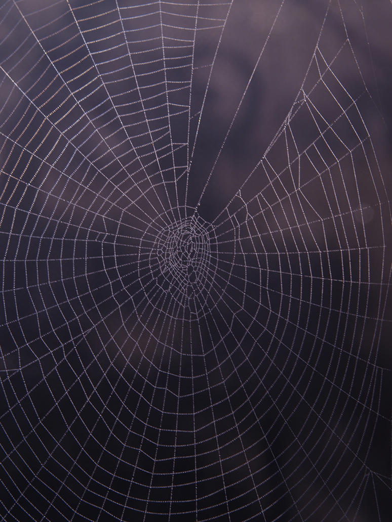 Spider Web Texture by DoodlebeSTOCK