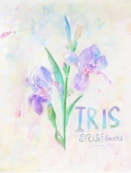 Iris Flower Practice