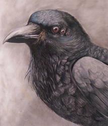 Raven by AlexisTigerSpice