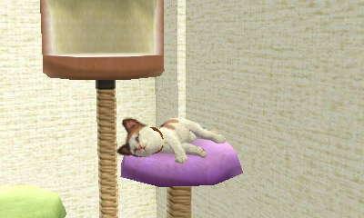 Cookie's cat nap by AnnaTheWonderGirl01
