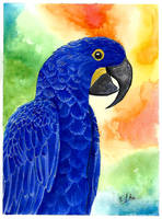 Hyacinth Macaw by Eif-ka