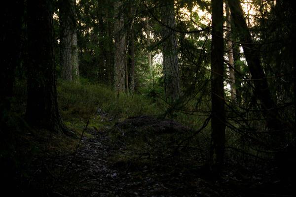 Dark Green Forest by MikuMassacre on DeviantArt