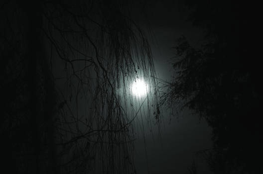 The willow and the moon