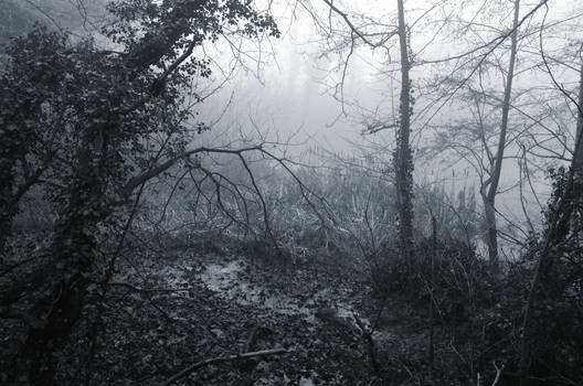 Reverie in the swampy wood