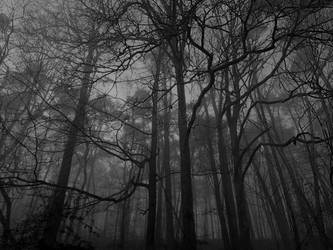 The forest is a temple by Dystopia-Maxima