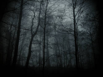 Where dryads dream by Dystopia-Maxima