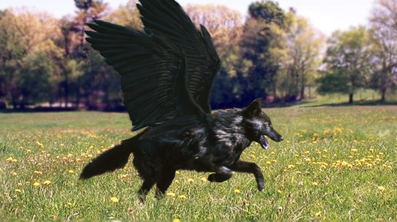 MW Character Sheets __winged_black_wolf___by_darktwilightangel