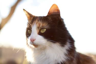 Cat by MartianOlsen
