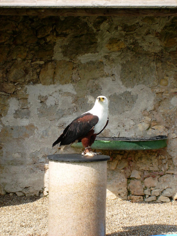 Bird of Prey 4 by wippmaster