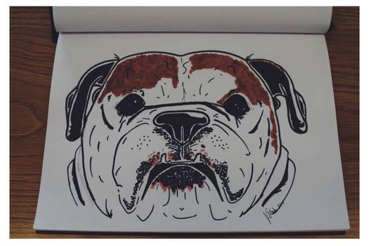 Lucy the Bulldog