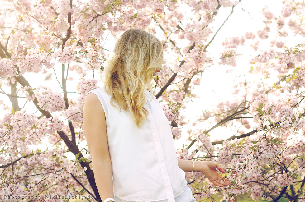 Pink flowers by NiklasLiebig