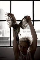 dead bird, window light by phusaki
