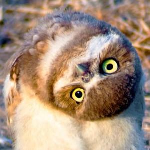 PeckishOwl's Profile Picture
