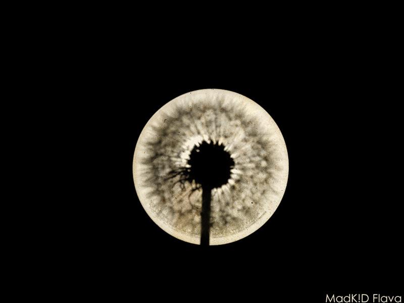 Dandelion Eclipse 1.1 by MadKIDFlava