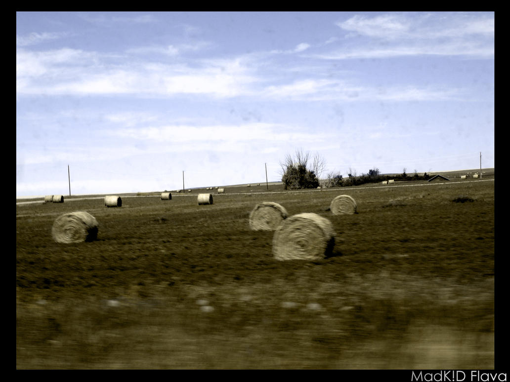 The Harvest by MadKIDFlava