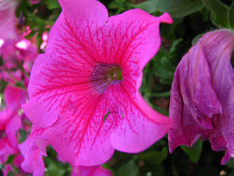 Pink Flower Macro by AGoldenDragon