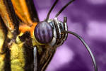 Butterfly Portrait 2D by OMGAlberto