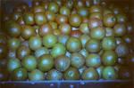 Orange - the green by Beckgalealesz