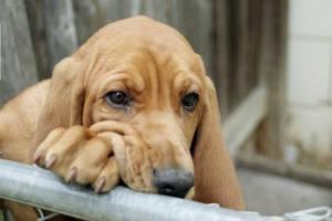 Hound dog.. by StaticDischarge