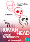 Human Head for beginners Video tutorial