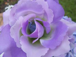 Purple beauty by Aj0404