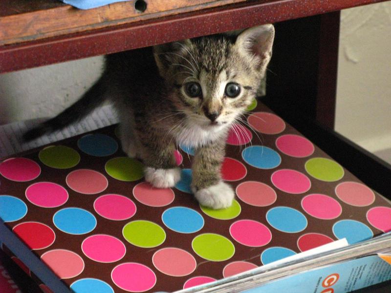 Kiki   My Kitty by AlaraLP