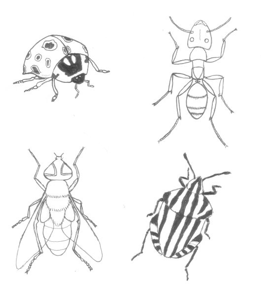 Line Drawing Insects : Insect drawings