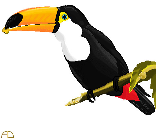 Toucan Bird Drawing Toucan Drawing On Ms P...