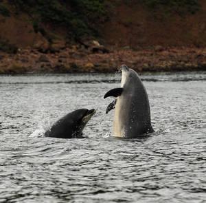 Moray Firth Fun
