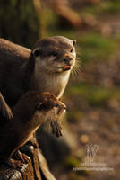Otter Mum and Pup by Shadow-and-Flame-86