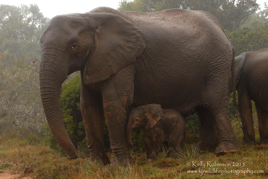 Newborn Elephant by Shadow-and-Flame-86