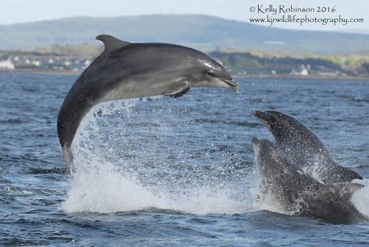 Triple Dolphin Breach!