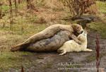Seal pup hugs