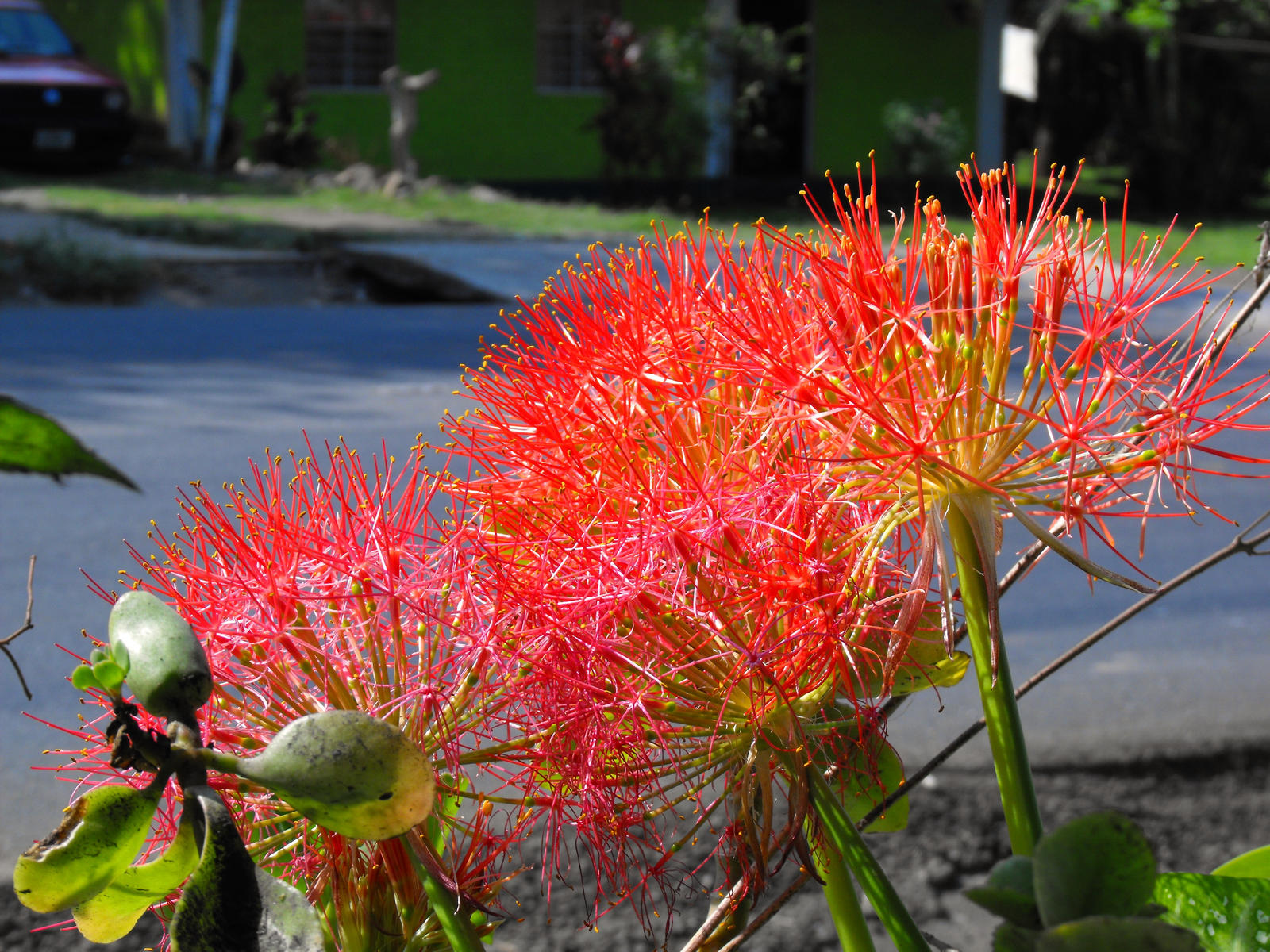 Flores de temporada by alexsan100 on deviantart for Plantas temporada