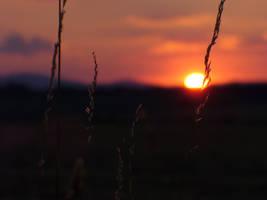 sunset by neethea