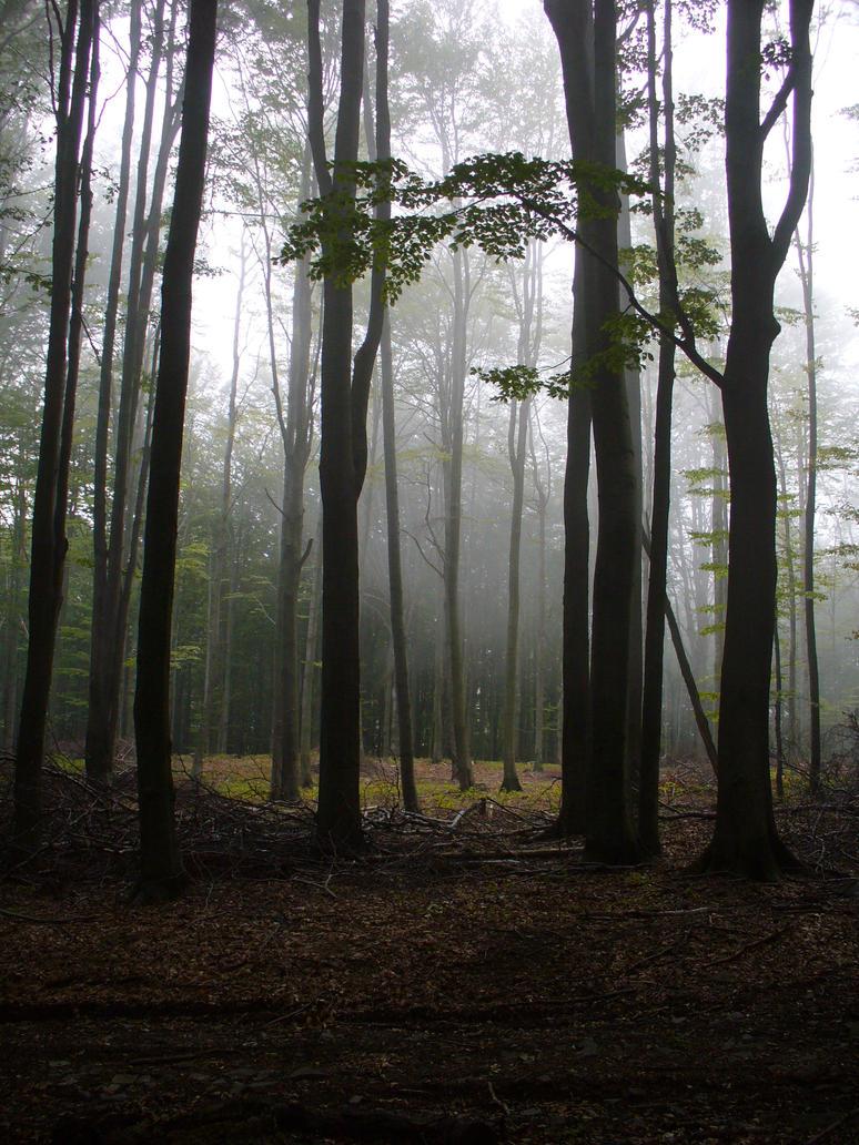 dark forest by neethea