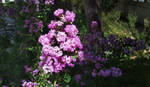Flores en sol y sombra by Autodidacta