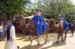 Paseo en camello by Autodidacta